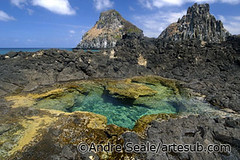 Tide pool-Noronha