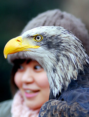 American bald eagle (floridapfe) Tags: animals zoo nikon eagle bald korea american southkorea americanbaldeagle everland naturesfinest d80 anawesomeshot aplusphoto theunforgettablepictures