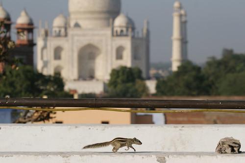 Agra runner