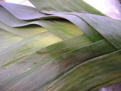 One Windmill Farm veggies