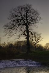 Trees and weir, Pollok Park, Glasgow. (Sony_A100_A700) Tags: trees sunset river glasgow sony recreation manual february alpha 2008 f11 022 a100 weir pollokpark photomatix sonyalpha sonyalpha100 3framehdr minoltaaf3570mmf3545 photoshopelementsv50