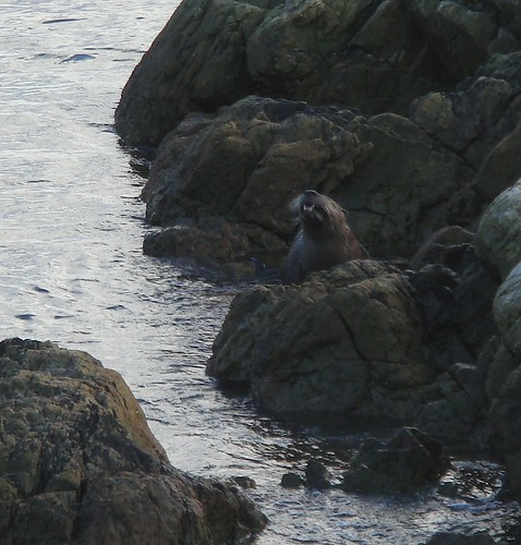 Otter on the Westsong