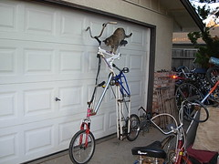 Dorje dismounts from Low Orbit Skylab (whymcycles) Tags: cats bike cat kitty bikes skylab kitties tallie dorje tallbike curiouscat highbike whymcycle