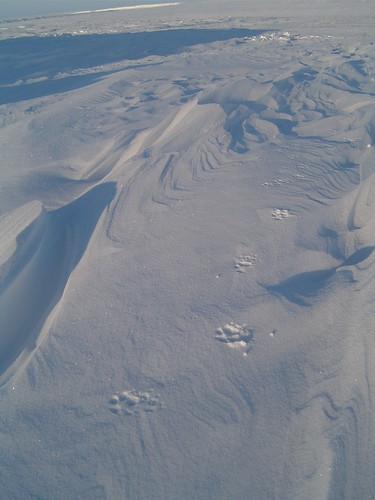 arctic desert 5