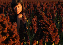 (virginiaz) Tags: sunset selfportrait field harvest crop sorghum entrerios aterdecer urdinarrain virginiaz aplusphoto campodesorgo goldenvisions