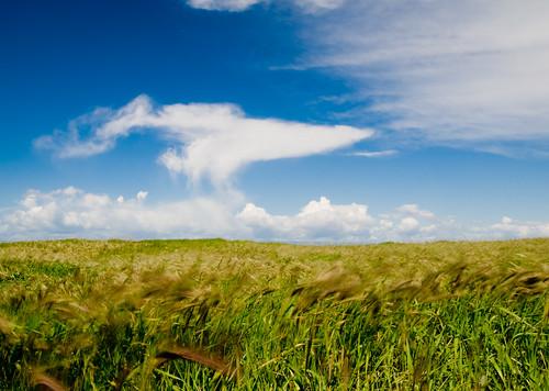 Fields of Green, Skies of Blue