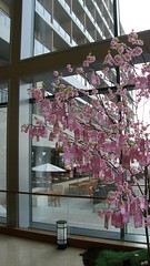 07.這個角度看櫻花樹更漂亮