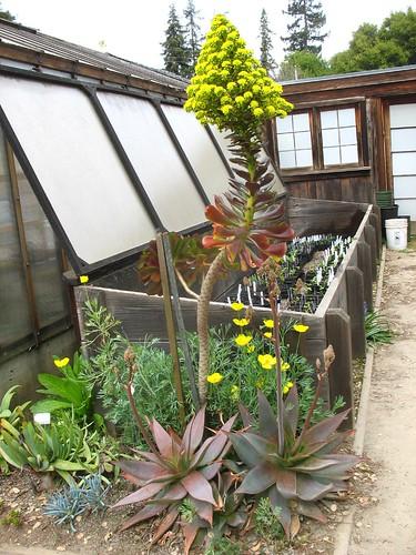 Gamble Garden (Palo Alto, CA)