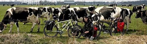 Las bicis nuevas y las vacas holandesas que vinieron curiosas para salir en la foto, ahora ya estoy atras del alambre , por eso estoy sonriendo