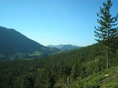 Morning in Lura (Lubardhi) Tags: blue sky panorama mountain green pine forest landscape albania mal pineforest lura shqiperia shqipëri pisha peisazh shqipëria pamje pyll lurë pyjet kunoraelurës panoramë photocontesttnc09