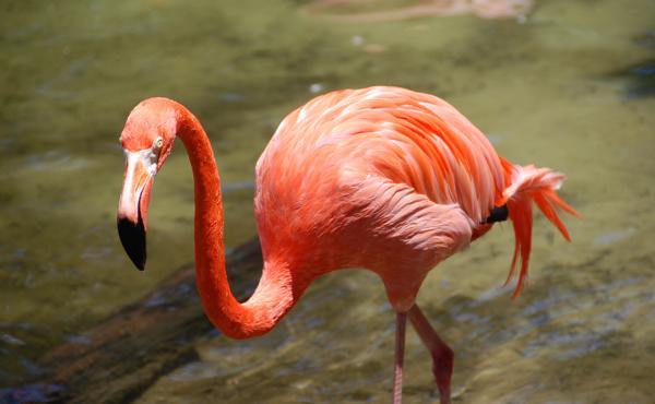 Flamingo0201