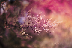 - (-LilyBeth) Tags: nature natura nikon d3000 dof depthoffield wonderfulworld colors outside bokeh