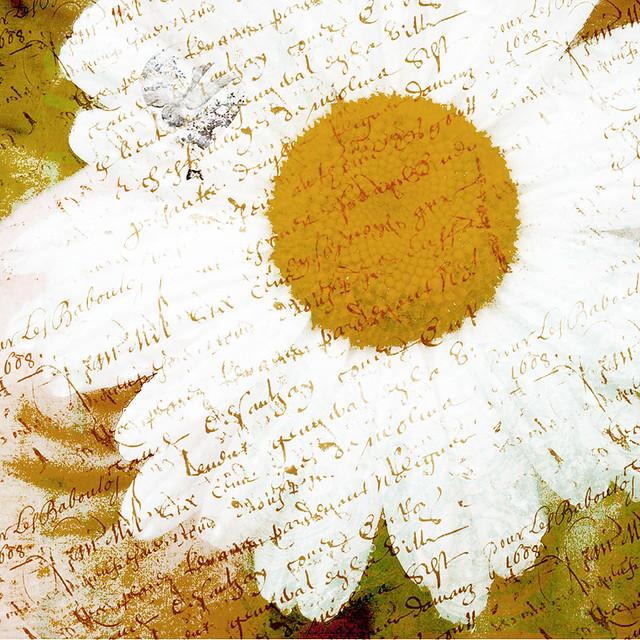 daisy textures