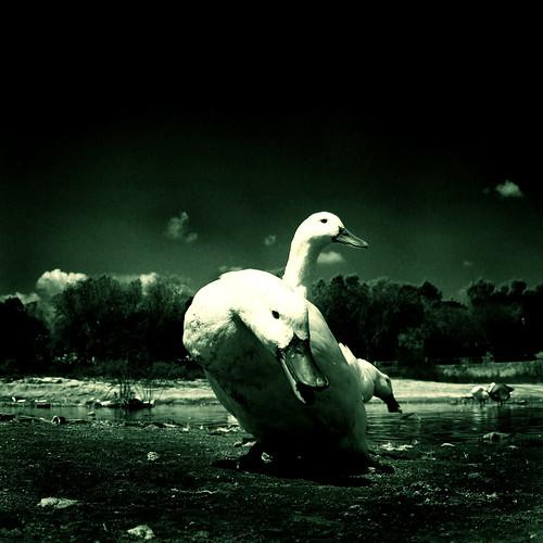 Third O' Ducks