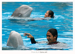 Dolfin ,, (Nasser Bouhadoud) Tags: park trip blue man water pool swimming canon thailand eos 350d women bangkok center 2006 safari mm 300 75 pure f4 56 dolfin saher ناصر بانكوك allil تايلاند lllusm بوحدود
