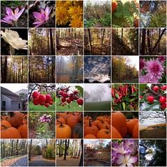 mosaic (pollyalida) Tags: fun fdsflickrtoys flickr bighugelabs