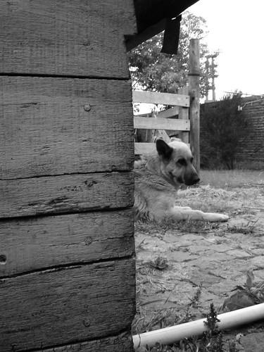 [Material Propio] Fotografia - Mi perra + otras