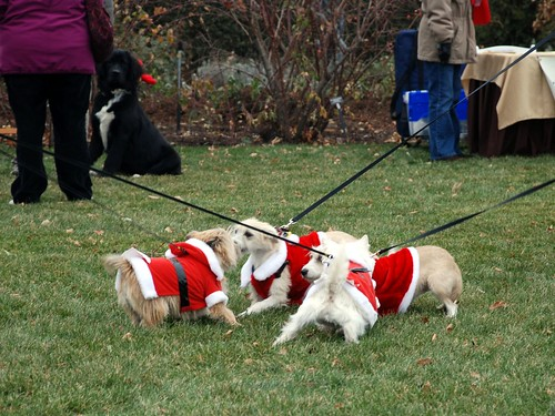 Reindog 10: Terrier Santa rumble