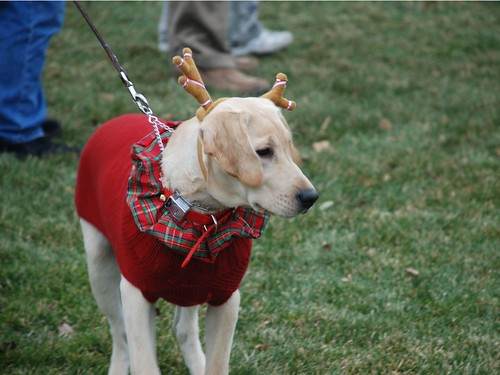 Reindog 29: Hey, a dog dressed as a reindeer!