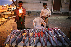 fish for sale - Aden (Maciej Dakowicz) Tags: travel sea fish man tourism lamp night work asia market arabia yemen aden arabiansea gulfofaden