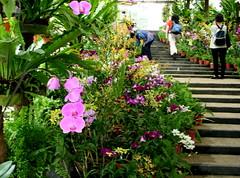 Bunga Orkid di taman