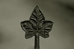 metal ivy leaf (Leo Reynolds) Tags: blur canon eos iso400 f45 metalwork duotone 140mm 0ev 0008sec canonef70300mmf456isusm 40d hpexif leol30random groupobjectblur grouptwtme threadtwtme threadtwtme2mon xratio32x groupsepiabw xleol30x