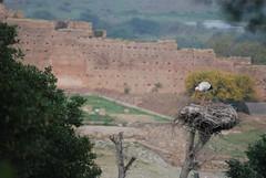 DSC_0260.JPG (tenguins) Tags: africa bird ruins nest arabic morocco berber perch stork rabat chelle siteseeing chella romanruins