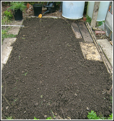beetroot bed copy