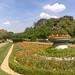 Regent's Park Flowers