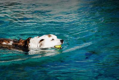 Pax swimming