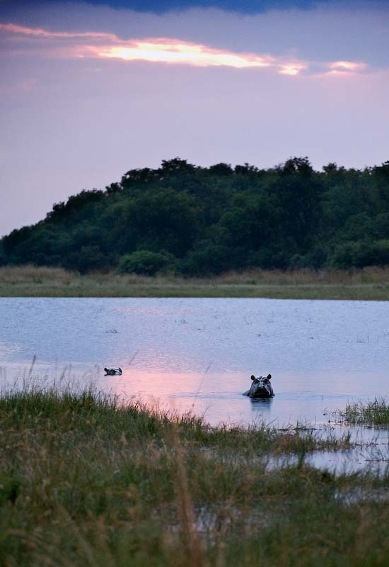 Hippos Sunset