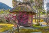 Plum Blossoms at Hōgyoku Garden, Shozan resort in Kyoto! (KyotoDreamTrips) Tags: baikasai hōgyokutei japan japanesegardens kyoto plumblossoms shozan ume しょうざん 峰玉亭 梅花祭