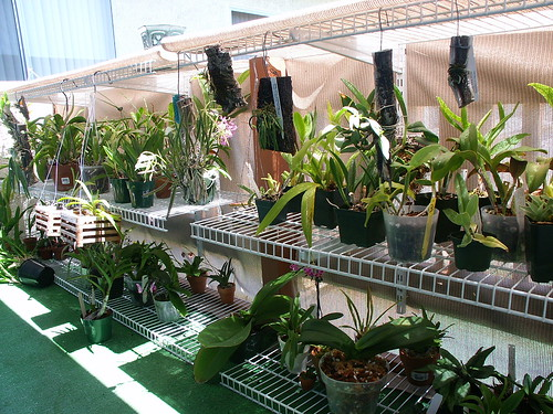 12 Homemade Indoor Hydroponics Systems further Rhododendron Simsii as well Small New York City likewise Indoor Garden Plants Ideas additionally Lizzie Borden Took An Axe. on growing orchids outside