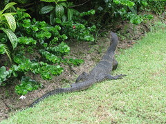 (sensesmaybenumbed) Tags: thailand island hotel honeymoon resort lizard phuket rachayaiisland kohrachayai theracha