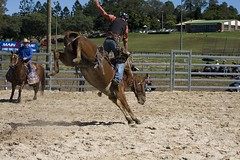 IMG_8732 (indy turtle) Tags: brisbanemeetup daybororodeo