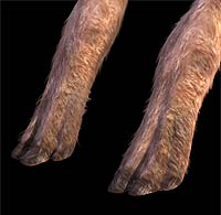 propalaeotherium 4 little hooves
