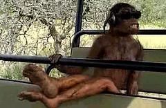 cool australopithecus