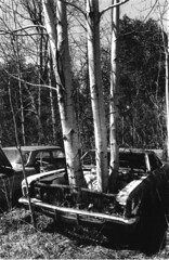 Rebirth #1 (peterkelly) Tags: trees ontario canada tree abandoned film car forest searchthebest canadian northamerica junkyard derelict rockwood wreckingyard