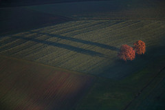 Two trees in a field (Aerial Photography) Tags: sunset shadow two tree field by germany landscape la aerial agriculture ndb 15112006 unterfroschham 5d015535 hochberbayern2