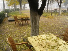 While the spring passing away*** (OnrPhotography) Tags: park autumn tree fall leaves yellow fog turkey trkiye turquie trkei tables sis turkije turquia gaziantep tyrkiet turchia sar aa yapraklar turkki turkiet sonbahar yaprak tyrkia antep tyrkland onuroca