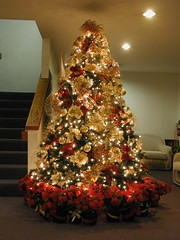 7.5-ft Red & Gold Christmas Tree (Mastery of Maps) Tags: california christmas ca winter decorations red usa holiday glass glitter america weihnachten gold navidad la losangeles holidays shiny cross unitedstates metallic poinsettia celebration socal ornaments ribbon poinsettias southerncalifornia orangecounty anaheim nol oc netting decor natale bows potted decorated sheer holidayseason losangelesarea treetopper christmasseason minilights laarea greaterlosangelesarea cbcoc