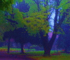 My Place  (#484-10/07) (Winnik Images) Tags: autumn trees home wet leaves misty sunrise dawn cool october dusk foggy earlymorning serene damp latefall