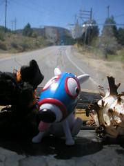 travelin' buddy (kneesamo) Tags: dog lake toy dash 1973 hughes datsun butterscotch 620 l20b bulletside pl620