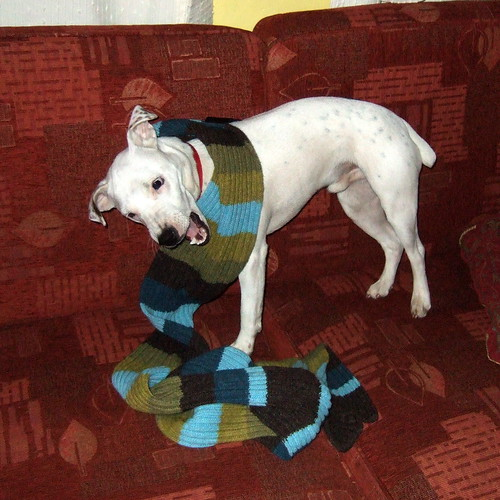 Dog Eats Scarf by Johnny Jet, on Flickr
