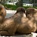 Los Angeles Zoo 043
