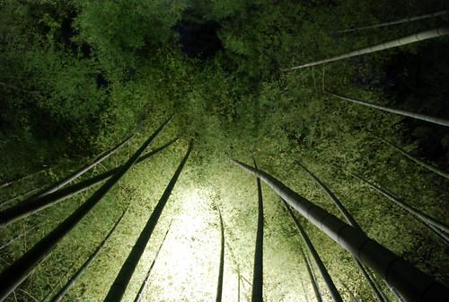 Kodaiji en la noche. Templos (y 4). Kyoto Tales (7)