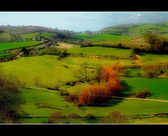 Spring From Above (Finntasia old) Tags: uk trees england west beauty sunshine spring village sheep south scenic warmth tranquility dorset fields buds farms picturesque bridport hedgerows symondsbury finntasia nigelfinn