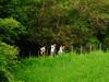 DSCF2179 (Pedro Cavalcante) Tags: fuji finepix fujifilm 6500 s6500 s6500fd finepixs6500 finepix6500 pedrocavalcante