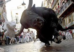 bull closeup