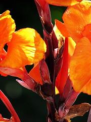 Anaranjadas 3 (Jaime Mira) Tags: santa en flores cruz flres